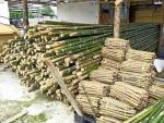ไม้ยูคาชลบุรี - ห้างหุ้นส่วนจำกัด นิพนธ์ค้าไม้