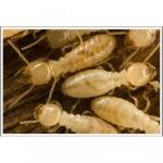 กำจัดแมลง เชียงใหม่ - บริษัท เวิลด์ เพสท์ เซอร์วิส จำกัด