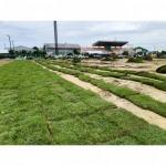 รับปูหญ้าเทียม สนามฟุตบอล - ไร่หญ้า จ๋า หรือ มนู