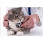 รักษาสัตว์ ศัลยกรรม ผ่าตัด เข้าเฝือกสัตว์ สระบุรี - โรงพยาบาลสัตว์เมืองเพรียว สระบุรี