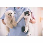 ตรวจสุขภาพสัตว์ สระบุรี - โรงพยาบาลสัตว์เมืองเพรียว สระบุรี