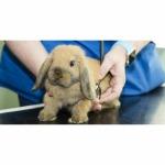 รับฝากเลี้ยงสัตว์ สระบุรี - โรงพยาบาลสัตว์เมืองเพรียว สระบุรี