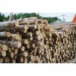 ไม้แบบงานก่อสร้าง ชลบุรี - บูรพาค้าไม้