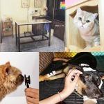รักษาสัตว์ สุราษฎร์ธานี - โรงพยาบาลสัตว์สุราษฎร์ธานี