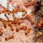 บริษัทกำจัดมด แมลงสาบ - ห้างหุ้นส่วนจำกัด จีบี เพสท์ คอนโทรล