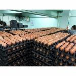 Bangkok Egg Boiled Eggs - Nichakamol Khaisod