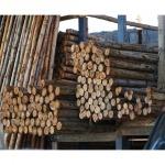 ขายส่งเสาเข็มไม้ยูคาราคาส่ง ชลบุรี - ศรีราชาไม้เข็ม
