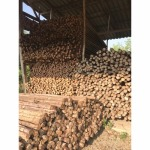 ขายไม้เสา สุราษฎร์ธานี - บริษัท เขานิพันธ์ค้าไม้ ซื้อ-ขาย ไม้ (2015) จำกัด
