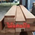 นำเข้า จำหน่ายไม้แคมปัส - บริษัท เขานิพันธ์ค้าไม้ ซื้อ-ขาย ไม้ (2015) จำกัด