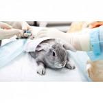 รักษาสัตว์พิเศษ นครศรีธรรมราช - โรงพยาบาลสัตว์หมอปราโมท