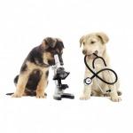 ตรวจสุขภาพสัตว์ นครศรีธรรมราช - โรงพยาบาลสัตว์หมอปราโมท