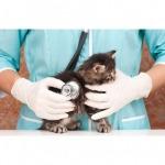 รักษาสัตว์ นครศรีธรรมราช - โรงพยาบาลสัตว์หมอปราโมท