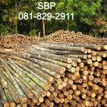 ไม้เสาเข็มยูคาทุกขนาด - บริษัท สนามชัยเสาเข็ม จำกัด