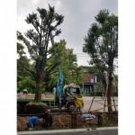 บริการขุดย้ายต้นไม้ใหญ่ - รถเครนรับจ้าง ขนส่งต้นไม้ เอ แอนด์ เอ เครน