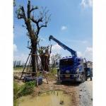 บริการค้ำต้นไม้ - รถเครนรับจ้าง ขนส่งต้นไม้ เอ แอนด์ เอ เครน