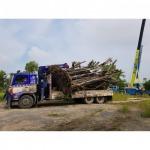 บริการเคลื่อนย้ายต้นไม้ใหญ่ - รถเครนรับจ้าง ขนส่งต้นไม้ เอ แอนด์ เอ เครน