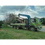 รับขนส่งต้นไม้ใหญ่ - รถเครนรับจ้าง ขนส่งต้นไม้ เอ แอนด์ เอ เครน