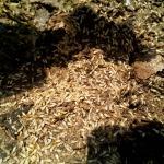 กำจัดแมลง - บริษัท กรีนพลัส เพส์ท คอนโทรล จำกัด