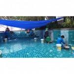 ทำความสะอาดสระว่ายน้ำ กระบี่ - บริษัท ซี เอส พี เคมิคัลส์ แอนด์ เทคโนโลยี จำกัด