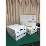 กล่องใส่อินทผาลัมสด - โรงงานผลิตกล่องกระดาษลูกฟูก - อินเตอร์ กรีน กรุ๊ป (1994)