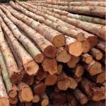 ไม้ยูคา - จำหน่ายไม้แปรรูป ไม้ก่อสร้าง ไม้เฟอร์นิเจอร์ และวัสดุก่อสร้าง