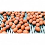 ขายส่งไข่ไก่สดจากฟาร์ม - กางกรณ์การค้า พิจิตร