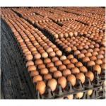 ขายไข่ไก่ พิจิตร - กางกรณ์การค้า พิจิตร