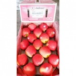 แอปเปิ้ล - ร้าน จำหน่ายผลไม้นำเข้า ตลาดไท -  ฉ.ฮั้ว