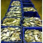 ขายส่งอาหารทะเล มหาชัย - ขายส่งอาหารทะเลสด มหาชัย มาวิน ซีฟู้ดส์