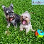 รับฝากสุนัขไม่ขังกรง เขตภาษีเจริญ - รับฝากสุนัขไม่ขังกรง ฝั่งธนบุรี