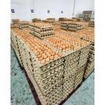 Wholesale eggs Chonburi - Egg Farm