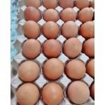 Farm eggs - Egg Farm