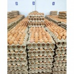 Wholesale source of chicken eggs - Egg Farm