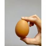 อยากขายไข่ไก่ - ฟาร์มไข่ไก่ชลบุรี ขายส่งไข่ไก่ราคาถูก - ฟาร์มยู่สูงไข่สด