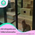 แนะนำโรงแรมแมวราคาถูก - โรงแรมแมว มารุโกะ เฮ้าส์