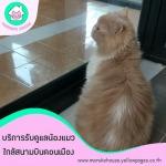 บริการรับดูแลแมวดอนเมือง - โรงแรมแมว มารุโกะ เฮ้าส์