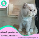 โรงแรมแมวเพื่อคนรักแมว - โรงแรมแมว มารุโกะ เฮ้าส์