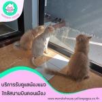 โรงแรมแมวราคาถูก - โรงแรมแมว มารุโกะ เฮ้าส์