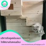 โรงแรมแมวรายวัน - โรงแรมแมว มารุโกะ เฮ้าส์