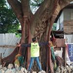 บริการตัดต้นไม้ สุขสวัสบางแค - เอส ซี คัต บริการตัดต้นไม้