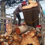 รับตัดต้นไม้ใหญ่ทุกชนิด - เอส ซี คัต บริการตัดต้นไม้