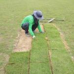 จำหน่ายพันธุ์หญ้าทุกชนิด - รับทำสนามฟุตบอล กฤษดา การ์เด้น แอนด์ ดีไซน์