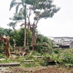 บริการถอนโค่นต้นไม้ใหญ่ อุบล - รับตัดต้นไม้เคลียร์พื้นที่รกร้าง อุบลราชธานี