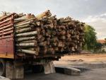 ขายส่งเสาไม้ราคาถูก - Prasert Piling Klong 11