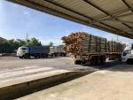 ไม้สำหรับงานก่อสร้าง - เสาเข็มไม้ยูคา ประเสริฐยูคาเทรด