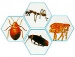 บริษัท รับ กำจัด มด แมลงสาบ เห็บ หมัด - Termite Termination Khon Kaen.