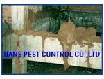 ปลวกขึ้นบ้าน กำจัดปลวก เรียก ฮั้นส์ - Termite Termination Khon Kaen.