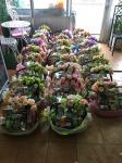 รับจัดกระเช้าของขวัญ ภูเก็ต - ร้านดอกไม้ พฤกษชาติ ภูเก็ต