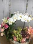 กระเช้าผลไม้ ภูเก็ต - ร้านดอกไม้พฤกษชาติ ภูเก็ต