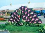 ร้านดอกไม้สด เจ๊กาดอกไม้สด - เจ๊กาดอกไม้สด อุดรธานี